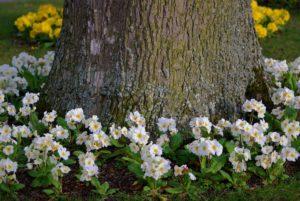 Baum im Frühling